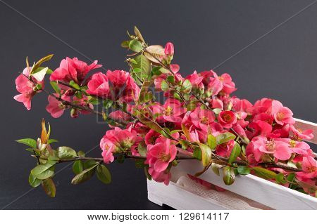 Japanese rose flowers in a wooden box