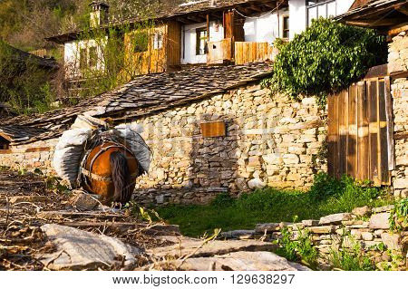 Horse laden with sacks standing in the garden of an old stone complex of a house ad outbuildings in Leshten village Bulgaria in the Rhodope mountains
