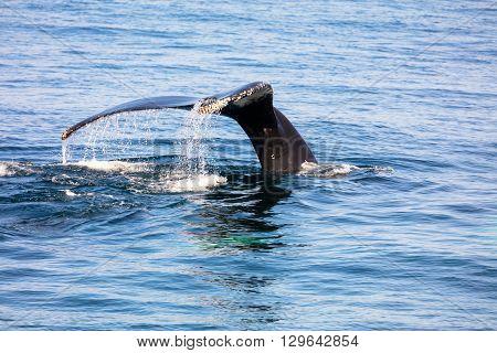 Whale Tail , Cape Cod, Cape Cod