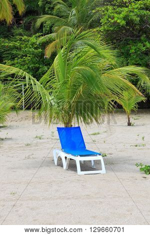 deck chairs under palm tree at the beach