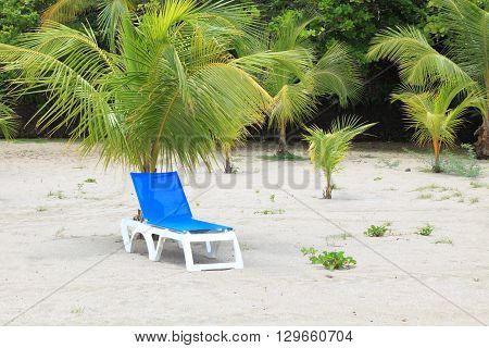 deck chair under palm tree at the tropical resort