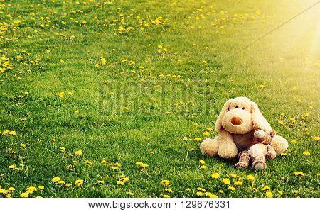 Plushtoys lying on the dandelion field in summer