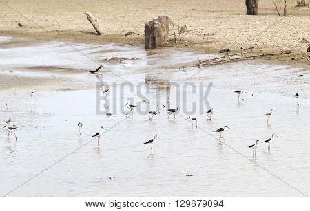 wild bird or stork standing resting walking and standing resting walking on floor outdoor under summer sunlight in Thailand