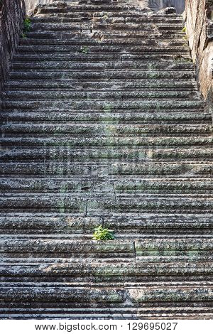 Green plant in the stone stairs in Cambodia