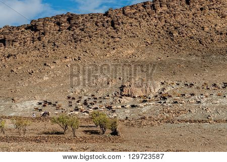 A large flock of sheep and goats looking for grazing land.