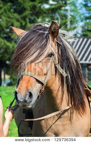 Horse portrait, mane, animal  nature beauty mane