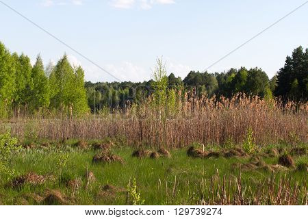 Panorama small river with reed on northern part of Ukraine, Sumy region. Riparian vegetation Salix sp. Flooded meadow
