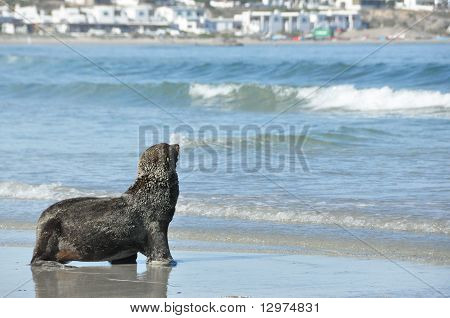 Seal in Paternoster