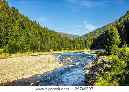 Mountain River Among Conifer Forest