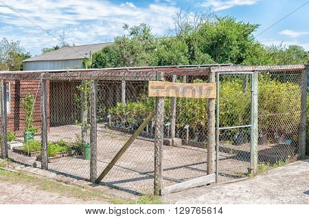 KNYSNA SOUTH AFRICA - MARCH 5 2016: The small nursery at Diepwalle where indigenous plants and trees of the Knysna Forest are propagated and sold