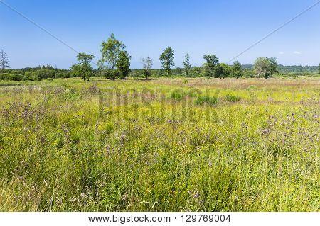 Moor Landscape In The High Fens, Belgium