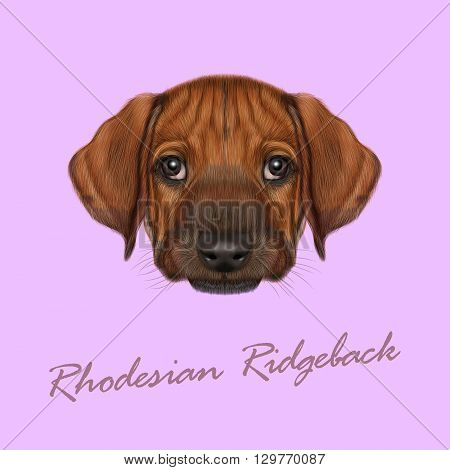 Vector Illustrated Portrait of Rhodesian Ridgeback dog. Cute orange face of domestic puppy on pink background.