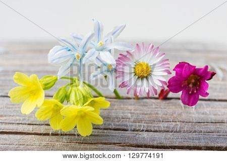 fresh spring flowers on wood with white background