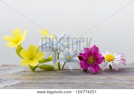 colorful fresh spring flowers on wood and white background