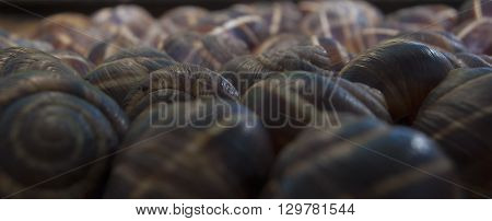 Group of snail shells under the sunlight