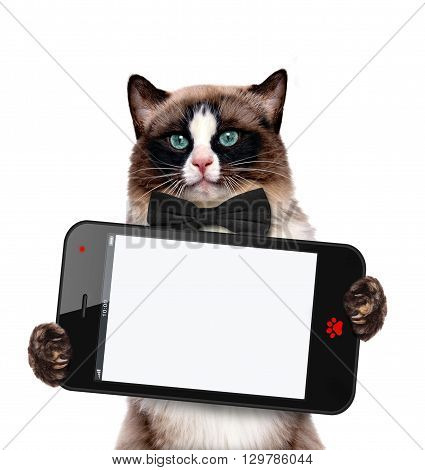 Fashionable cat holding a blank cell phohe.