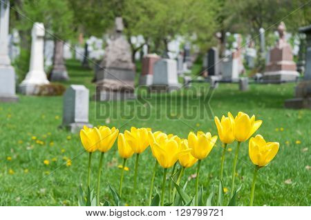 Headstones In A Cemetary With Yellow Tulips