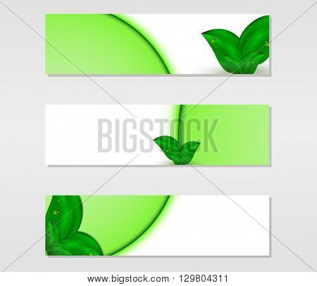 Set of vector banners with fresh green leaves with dew drops and green lines, vector illustration