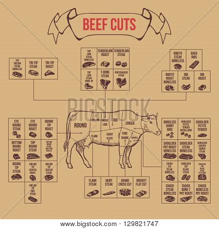 Vintage butcher cuts of beef diagram vector illustration