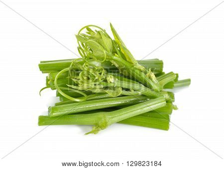 chayote leaves and stem on white background