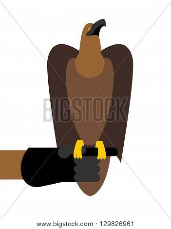 Falcon Hunting. Birds Of Prey Sitting On Hand. Trained Hunting Bird Sitting On Eather Glove