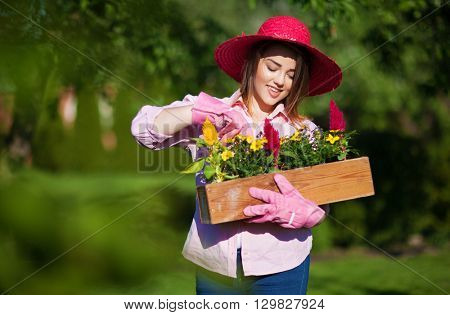 Woman in the garden wearing straw hat and gloves holding pot with blooming celosia flowers, gardening concept.