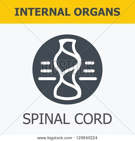 Internal organs - spinal cord. Family and a healthy lifestyle. Medical infographic icons, human organs, body anatomy. Vector icons of internal human organs Flat design. Internal organs icons.