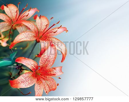light spring background with bright red lilies