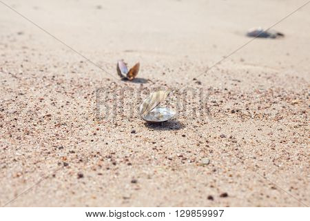 empty shell of mollusk on the sandy beach, selective focus