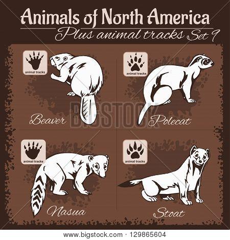 North America animals and animal tracks, footprints. Vector set.