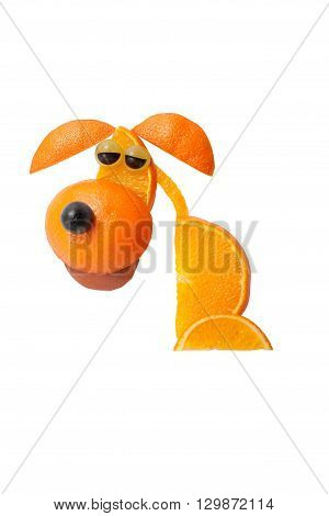 Sad sitting dog made of oranges on isolated background