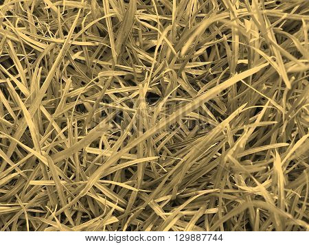 Grass Meadow Weed Sepia