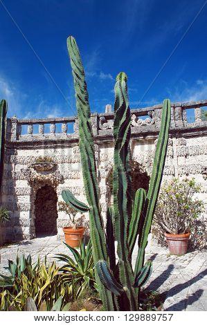 Cactus of Villa Vizcaya Gardens Miami Florida