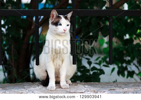 Anole white street cat, Russian Federation, Orel