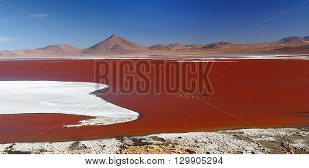 South America - Bolivia. The surreal landscape is nearly treeless punctuated by gentle hills and volcanoes near Chilean border. The picture present lagoon Colorada