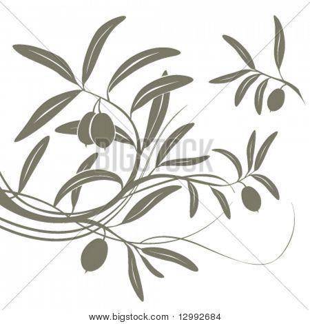 Olive branch. Vector floral background.