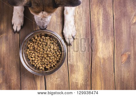 Bowl of dry kibble dog food and dog's paws over grunge wooden floor