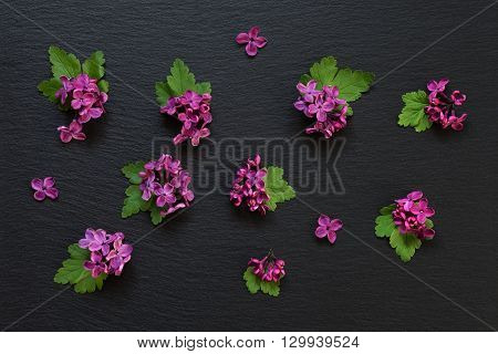 Small red flowers of lilac and green leaves are spread on a black slate; flat lay; top view; overhead view