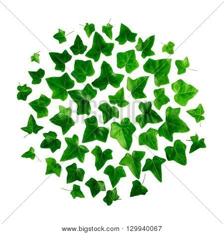 Round pattern of green ivy leaves on white background. Flat lay top view.