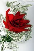 image of a red rose and babys breath on white background altered in photo shop poster