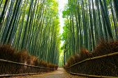 Beautiful scene in the Arashiyama bamboo forest with morning sunlight filtering through the stalks poster