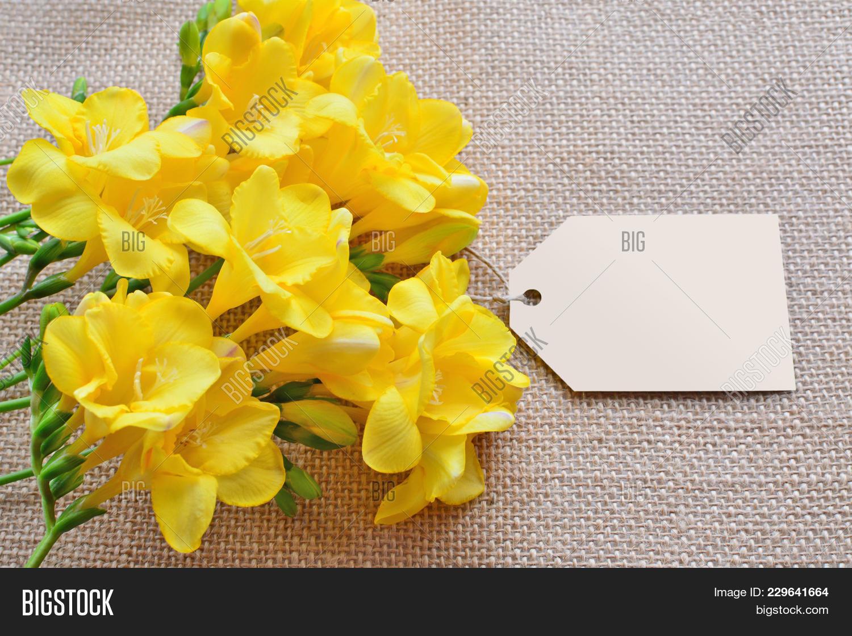 Yellow Freesia Flowers Image Photo Free Trial Bigstock
