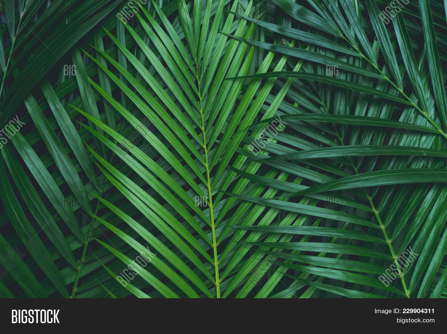 palm leaves coconut image photo free trial bigstock