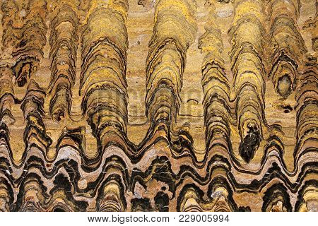 This stromatolite fossil slab shows colonies of Greysonia sp.. It is 650 million years old, from the Vendian period (pre-Cambrian) Bolivian fossils. poster