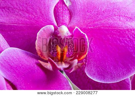Abstract Macro Shot Of The Flowering Orchid