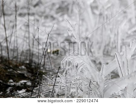 Natural Abstraction. Close Up Photo Of Icy Tree Branch On A Cold Winter Day. Freezing/icy Rain