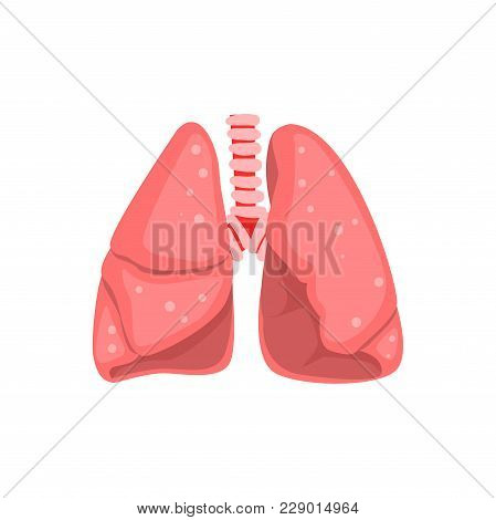 Human Lungs, Internal Organ Anatomy Vector Illustration Isolated On A White Background.