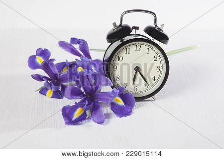 The Violet Irises Xiphium Bulbous Iris, Sibirica With Clock On White Background With Space For Text.