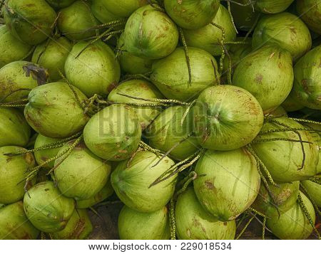 Green Coconut Fruit,  Texture And Background Coconut Fruits