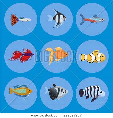 Exotic Tropical Aquarium Fish Different Colors Underwater Ocean Species Aquatic Nature Flat Vector I